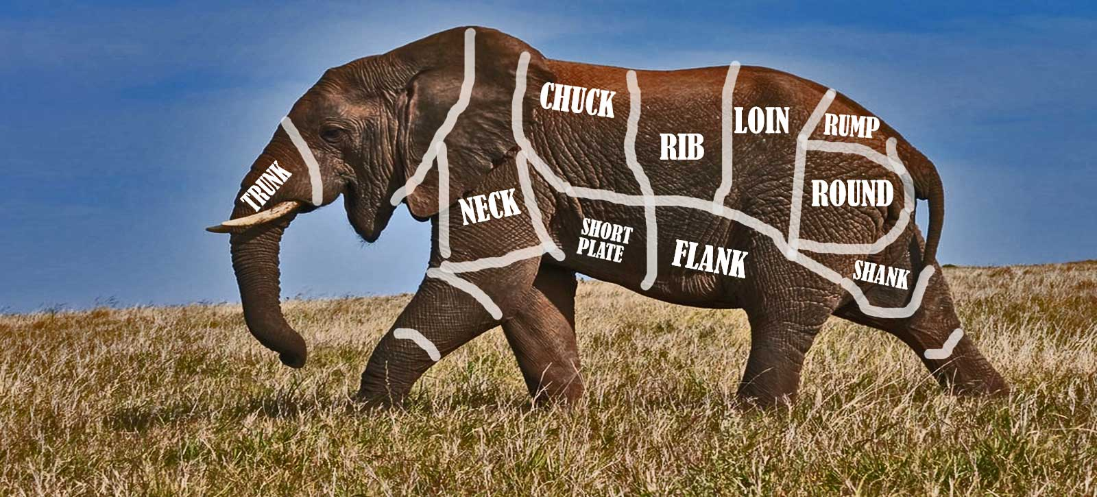 elephant pm
